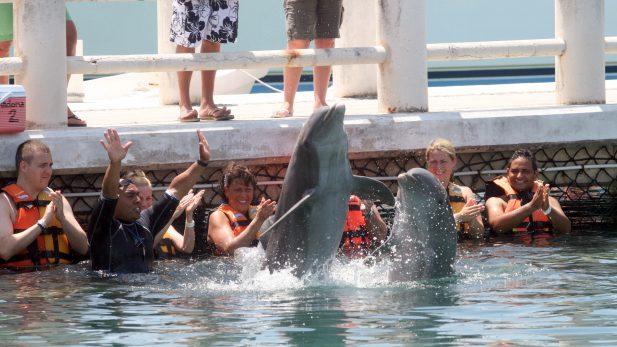 Prohíben espectáculos con delfines en la CDMX